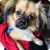 Adopt A Pet :: Eva - Pittsburgh, PA