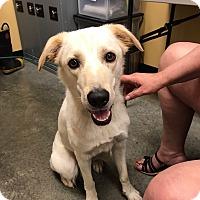 Adopt A Pet :: Bear#2 - Sparta, NJ