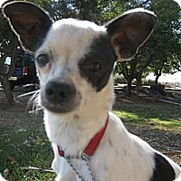 Chihuahua Mix Dog for adoption in Elk Grove, California - PEPPER