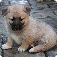 Adopt A Pet :: Ebi - La Habra Heights, CA