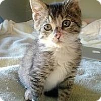 Adopt A Pet :: Honey - East Hanover, NJ