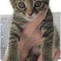 Adopt A Pet :: Pookie - Warren, MI