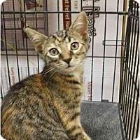 Adopt A Pet :: Cali Marie - Orlando, FL