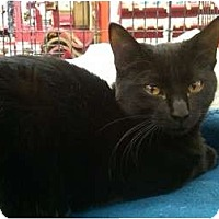Adopt A Pet :: Ashanti - Sterling Hgts, MI