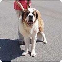 Adopt A Pet :: Teddy - Minneola, FL
