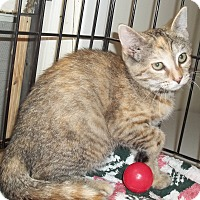Adopt A Pet :: Tortie - Acme, PA