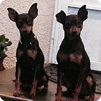 Adopt A Pet :: Jack & Jill - Oceanside, CA
