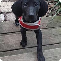 Adopt A Pet :: Widget - Knoxville, TN