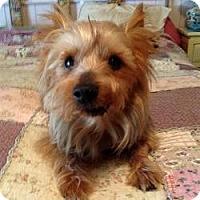 Adopt A Pet :: Boo Bear - Leesburg, FL