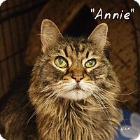 Adopt A Pet :: Annie - Ocean City, NJ