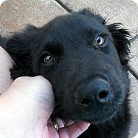 Adopt A Pet :: Baby Kylie - Oakley, CA