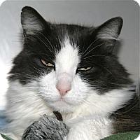 Adopt A Pet :: Willie - Port Angeles, WA