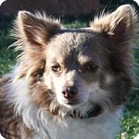 Adopt A Pet :: Milton - Colorado Springs, CO