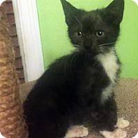 Adopt A Pet :: Katrina - Austin, TX
