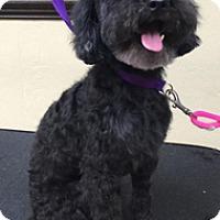 Adopt A Pet :: BUDDY BOY - Melbourne, FL