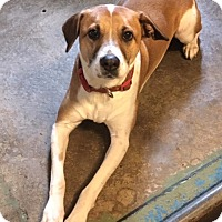 Adopt A Pet :: Casper - Los Angeles, CA