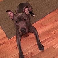 Adopt A Pet :: Mack - Bellflower, CA