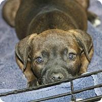 Adopt A Pet :: Ernie - Philadelphia, PA