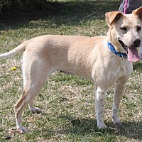 Adopt A Pet :: Jacki - Staunton, VA