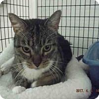 Adopt A Pet :: A572573 - Oroville, CA