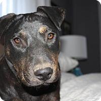 Adopt A Pet :: Cleo - Denver, CO