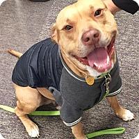 Adopt A Pet :: Rocky - Richmond, VA