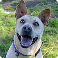 Adopt A Pet :: Fergie - Mountain Center, CA