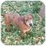 Photo 2 - Labrador Retriever/Catahoula Leopard Dog Mix Dog for adoption in Kaufman, Texas - Sally