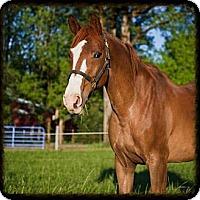 Adopt A Pet :: Clifford - Gresham, OR