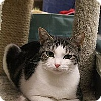 Adopt A Pet :: Scarlett - Chesapeake, VA