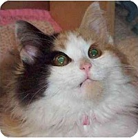 Adopt A Pet :: Little Darling - Annapolis, MD