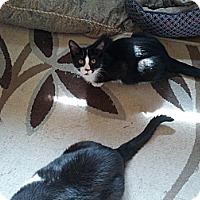 Adopt A Pet :: Tux - london, ON