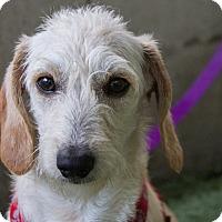 Adopt A Pet :: Raider - Mission Viejo, CA