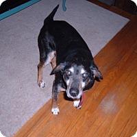 Adopt A Pet :: Boomer - Caledon, ON