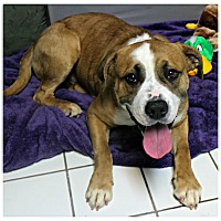 Adopt A Pet :: Rufus - Forked River, NJ