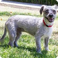 Adopt A Pet :: Pappy - Encino, CA