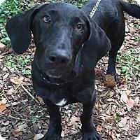 Adopt A Pet :: Benjamin - Orlando, FL