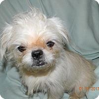 Adopt A Pet :: Miss Piggy - Umatilla, FL
