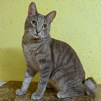 Adopt A Pet :: Corky - Westville, IN