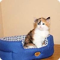 Adopt A Pet :: Kitten 10 - Atlantic, NC