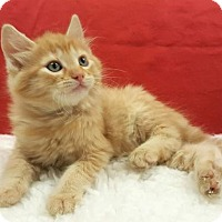 Adopt A Pet :: DaVinci - Modesto, CA