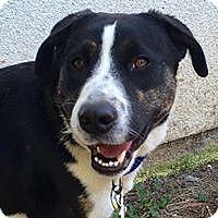 Adopt A Pet :: Tucker - Paso Robles, CA
