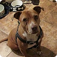 Adopt A Pet :: Chiquita - Scottsdale, AZ