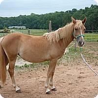 Adopt A Pet :: Triscuit - York, SC