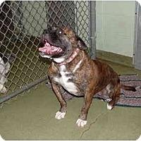 Adopt A Pet :: Fay - Julian, NC