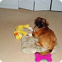 Adopt A Pet :: Mooshu - Davie, FL