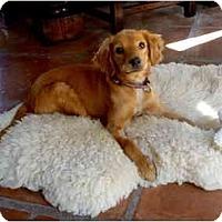 Adopt A Pet :: Rubi - Albuquerque, NM
