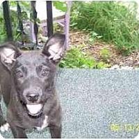 Adopt A Pet :: Carny - Wakefield, RI