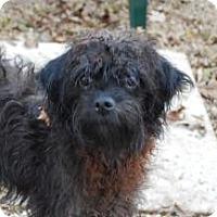 Adopt A Pet :: Walnut - Antioch, IL