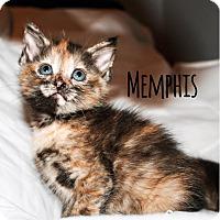 Adopt A Pet :: Memphis - Bentonville, AR